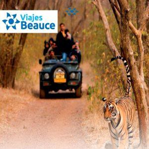 Vive lo mejor de India fascinante con Safari en Ranthambore..Reserva AHORA en Viajes BEAUCE.